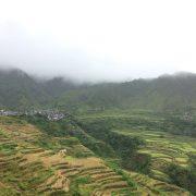 Regenzeit auf den Philippinen – Froschkonzerte in Orchesterstärke