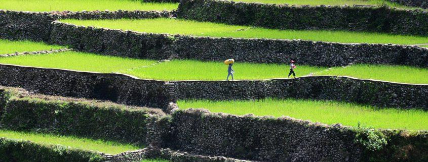Urlaub Philippinen und Nord-Luzon: Tipps für die Rundreise zu den Reisterrassen